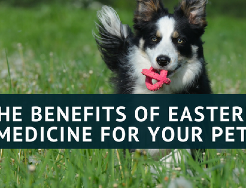 The Benefits of Utilizing Eastern Medicine for Your Pet