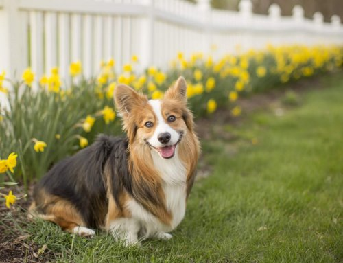Gardening Dangers for Dogs